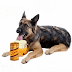 Six Most Fatal Foods Your Dog Should Avoid