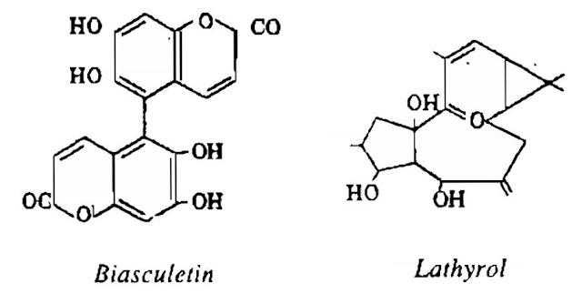 Thành phần hóa học Tục tùy tử - Euphorbia lathyris - Nguyên liệu làm thuốc Nhuận Tràng và Tẩy