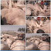Fulani Herdsmen Take Their Dead Cows To Emir's Palace After Being Attacked (Photos)