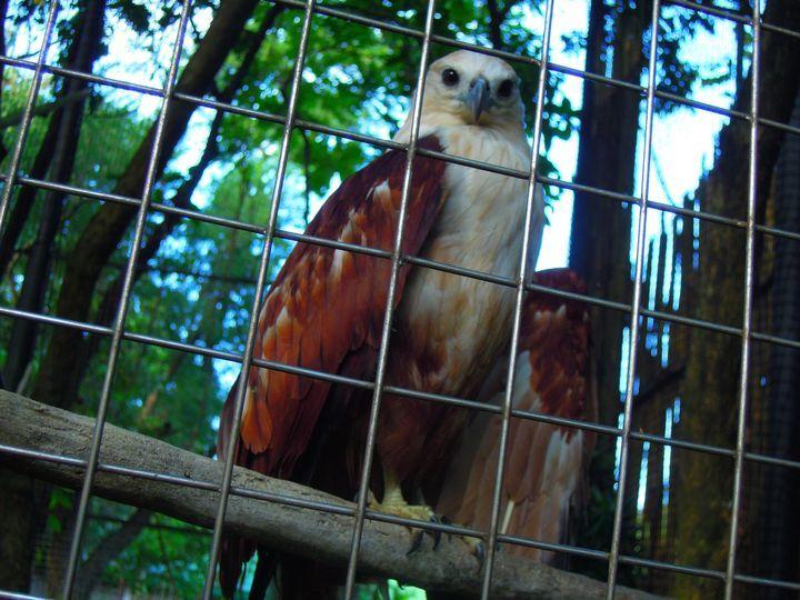 Bird inside Ninoy Aquino Parks and Wildlife in Quezon City