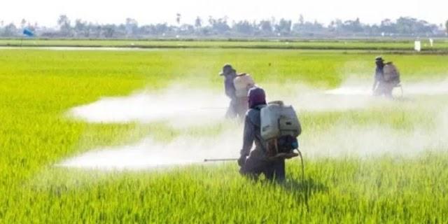 किसान ने घटिया कीटनाशक देने वाले दुकानदार को इस तरह सबक सिखाया | MP NEWS