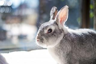 ウサギ写真