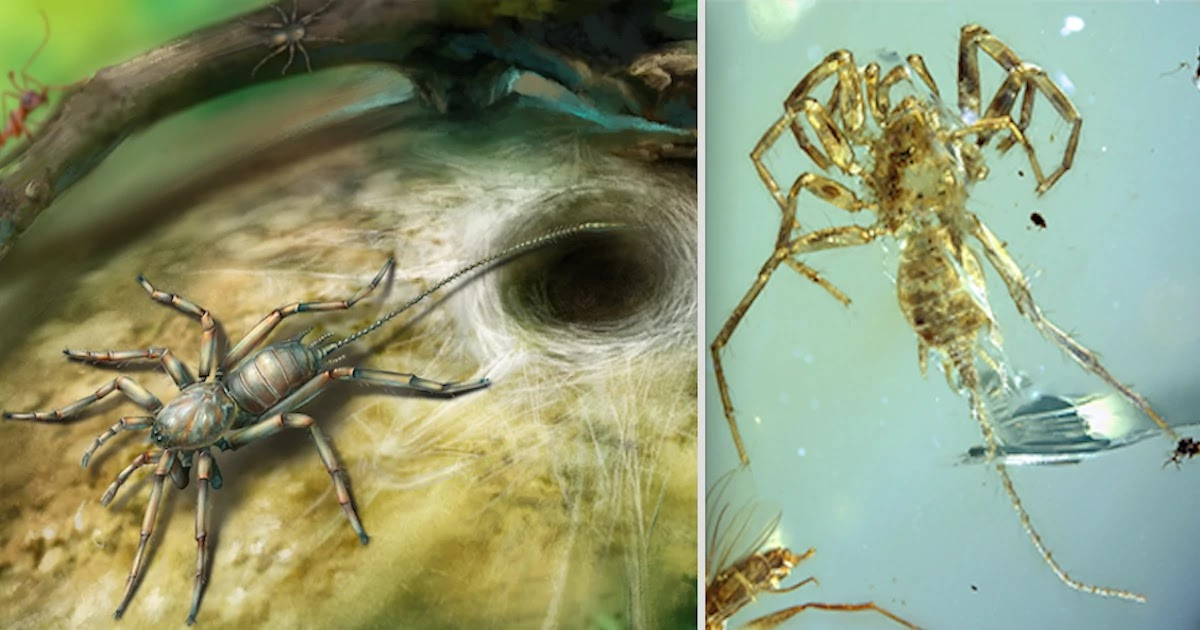 100-Million-Year-Old Scorpion-Tail Spider Is Discovered In Amber