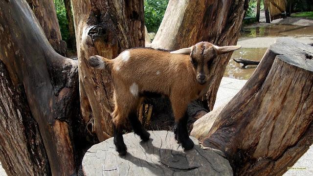 Jong geitje op boomstam