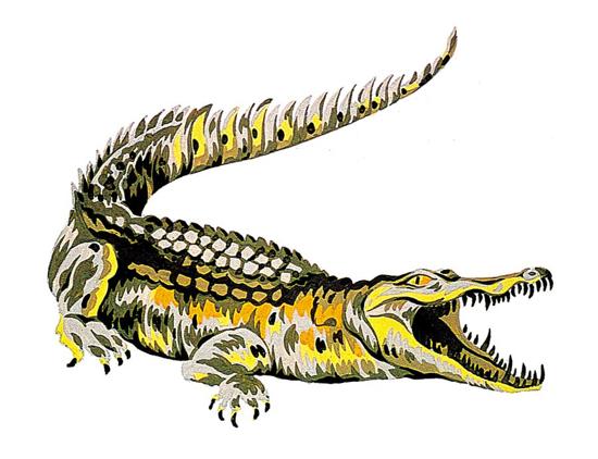 Lacoste crocodile original design 1926