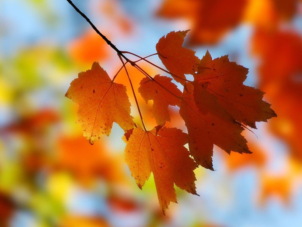 Windows 7 Autumn Wallpapers