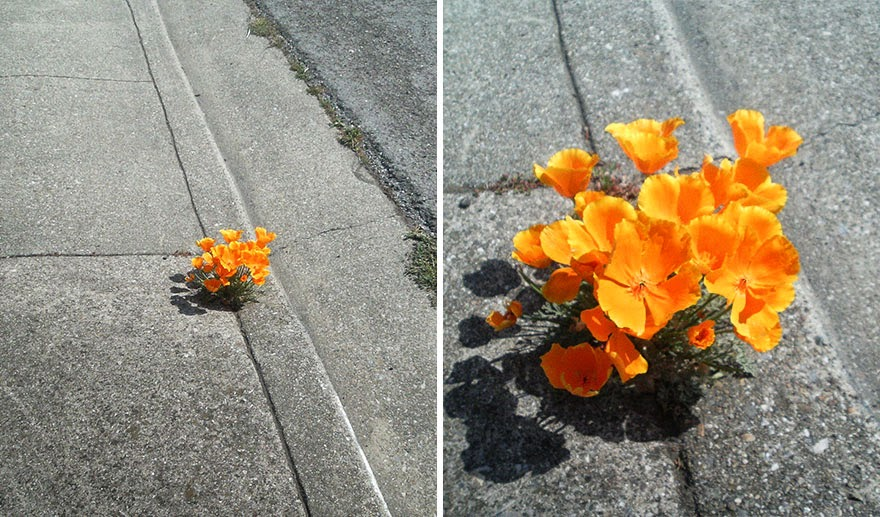 Life Finds A Way. 25 Plants That Just Won't Give Up