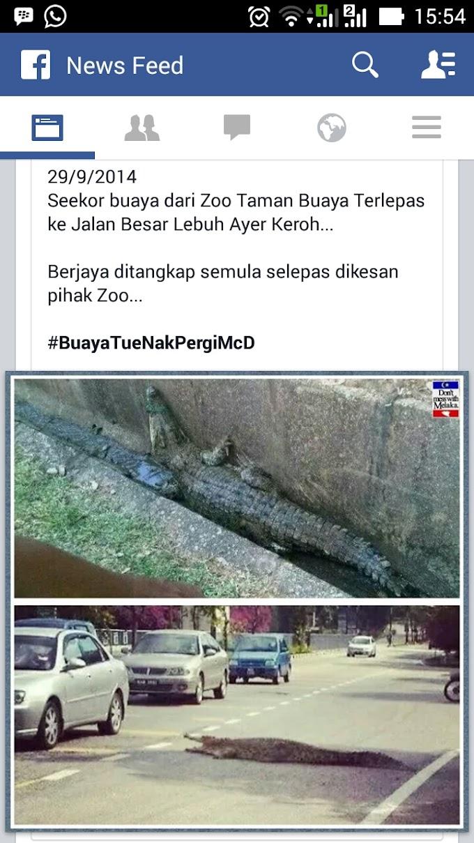 Buaya Terlepas Dari Zoo Melaka!!