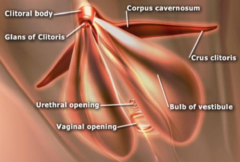 Rangsangan-Klitoris