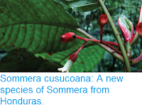 http://sciencythoughts.blogspot.co.uk/2015/11/sommera-cusucoana-new-species-of.html