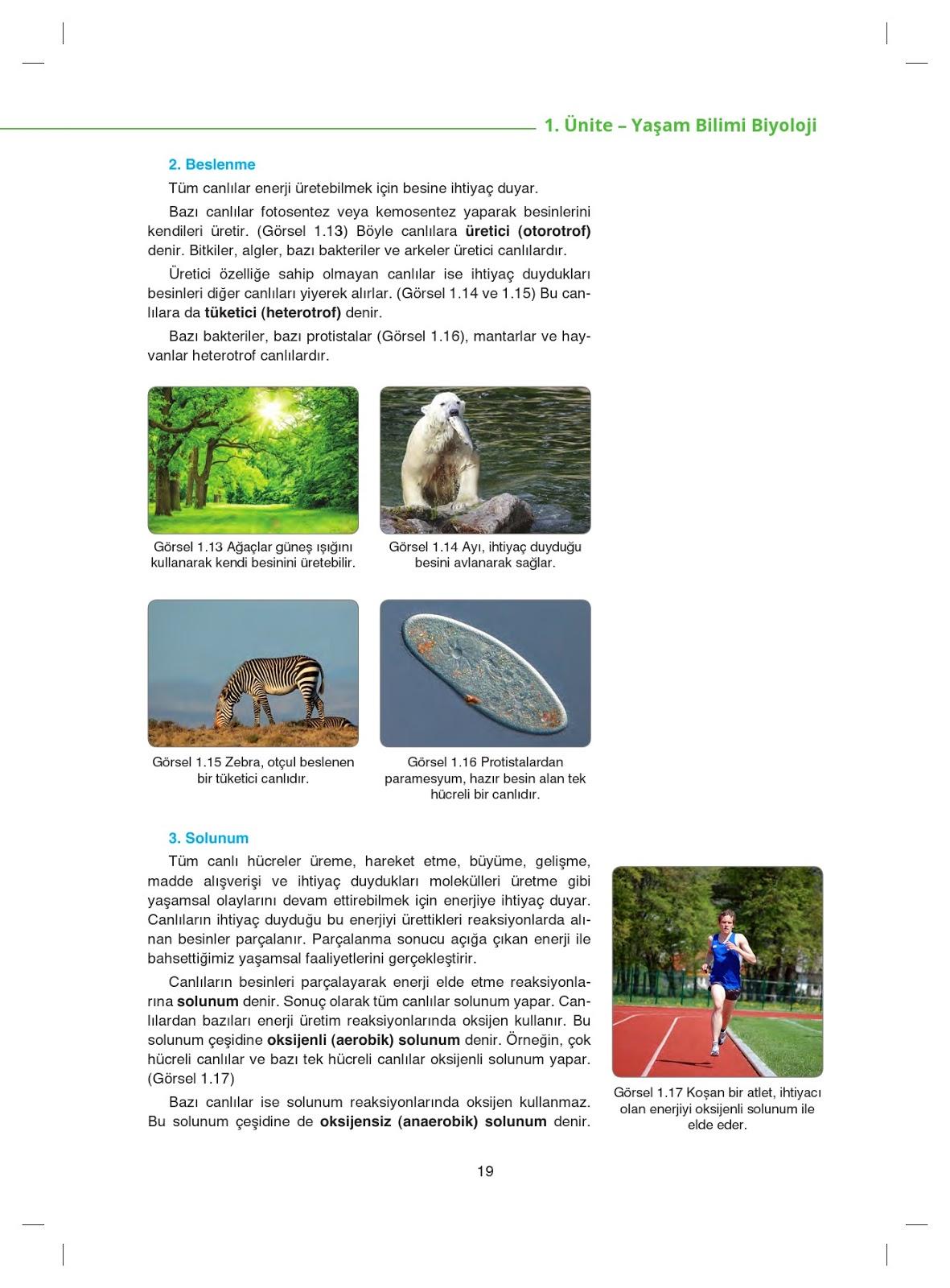 9 Sınıf Biyoloji Ders Kitabı Cevapları Netbil Yayınları Ata