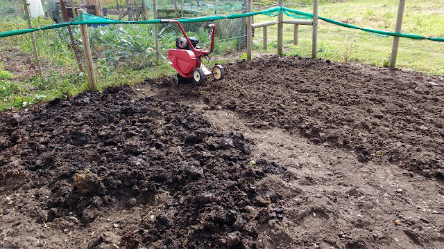 rotivating the allotment