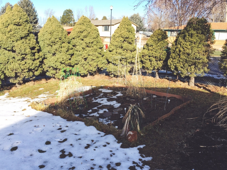 The garden after the snow started melting // Zone 6 & 7 Garden Tasks for February // www.thejoyblog.net