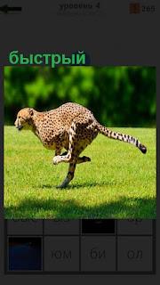 По полю вдоль леса бежит быстрый леопард, только хвост горизонтально