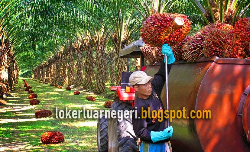 Lowongan Kerja Tenaga Kesehatan Februari 2013 Jawa Timur Informasi Lowongan Kerja Loker Terbaru 2016 2017 Job Malaysia Kelapa Sawit Biaya Gratis Lowongan Kerja Luar Negeri