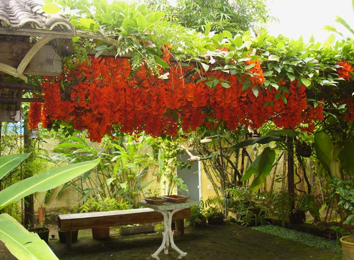 Studio Floral Dora Santoro: Jade Flor
