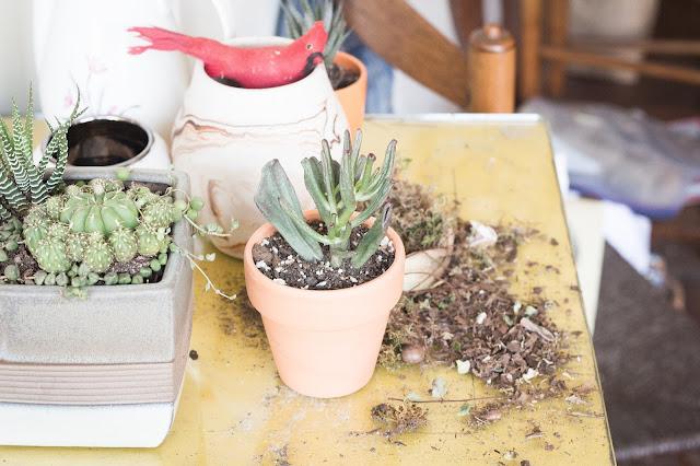 plantas tienda chrysanthemum brooklyn