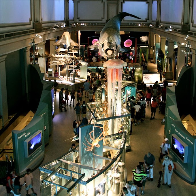 National Museum of Natural History director Kirk Johnson responds to sexual misconduct issues