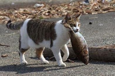 Foto Kucing Kampung Sedang Makan