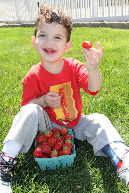 Jersey strawberries are YUMMY!