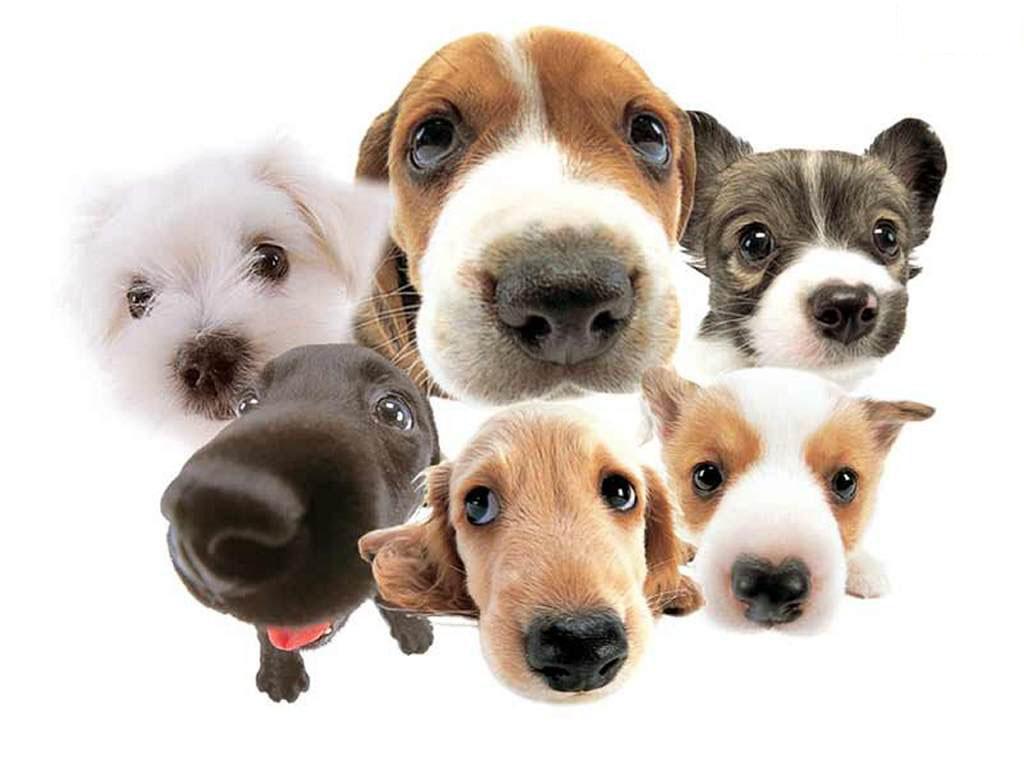 pet shop  Nomes para cães Machos com a Letra B