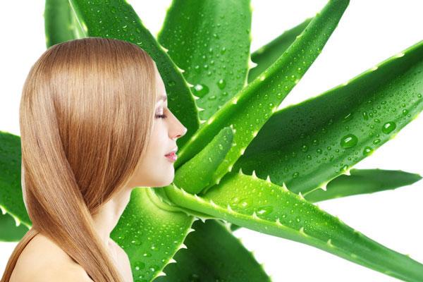 Aloe Vera Benefits For Hair