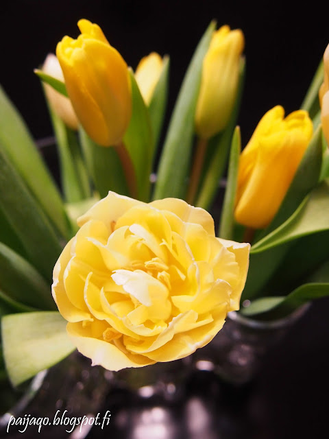keltaiset tulppaanit