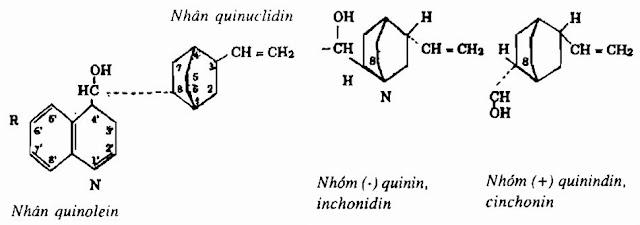 Thành phần hóa học Canhkina - Cinchona ledgeriana - Nguyên liệu làm thuốc Chữa Cảm Sốt