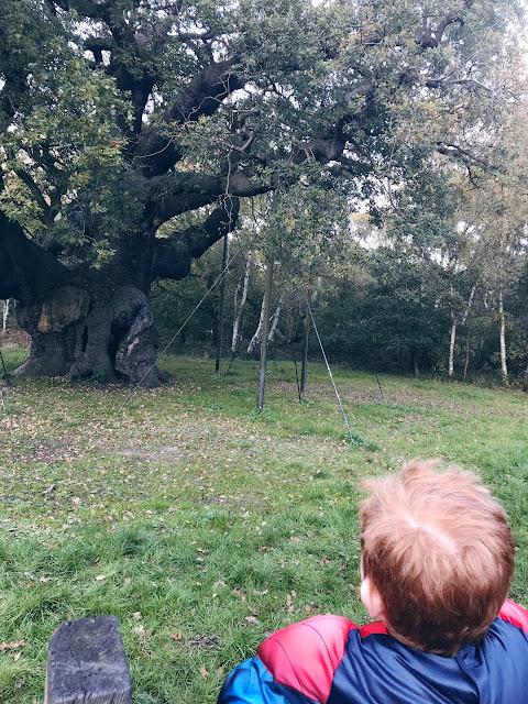 Red haired boy looking up at the major oak