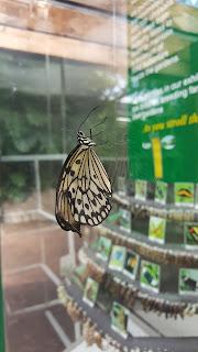 victoria-butterfly-gardens
