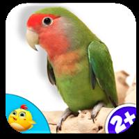 real bird game