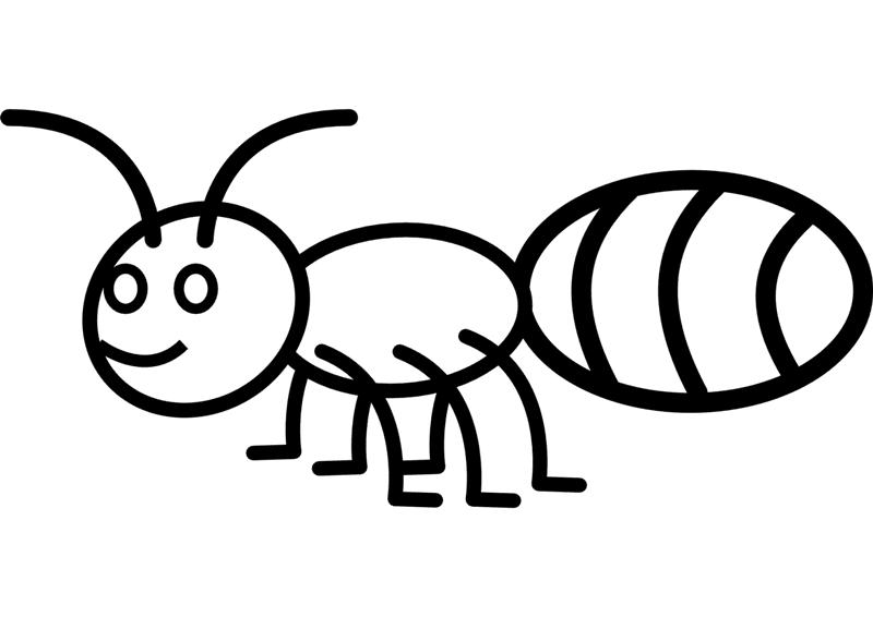 Dibujo Para Colorear De Invertebrados