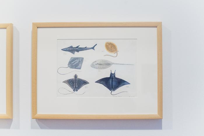 goma - watercolour on paper