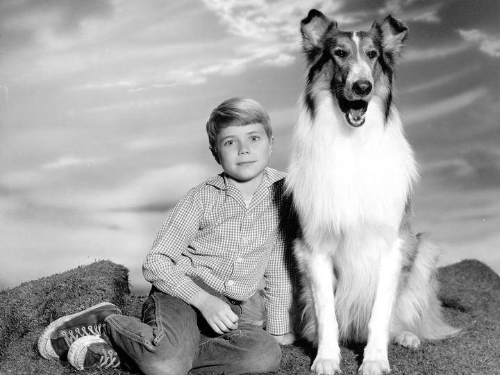 Lassie Tv Serie