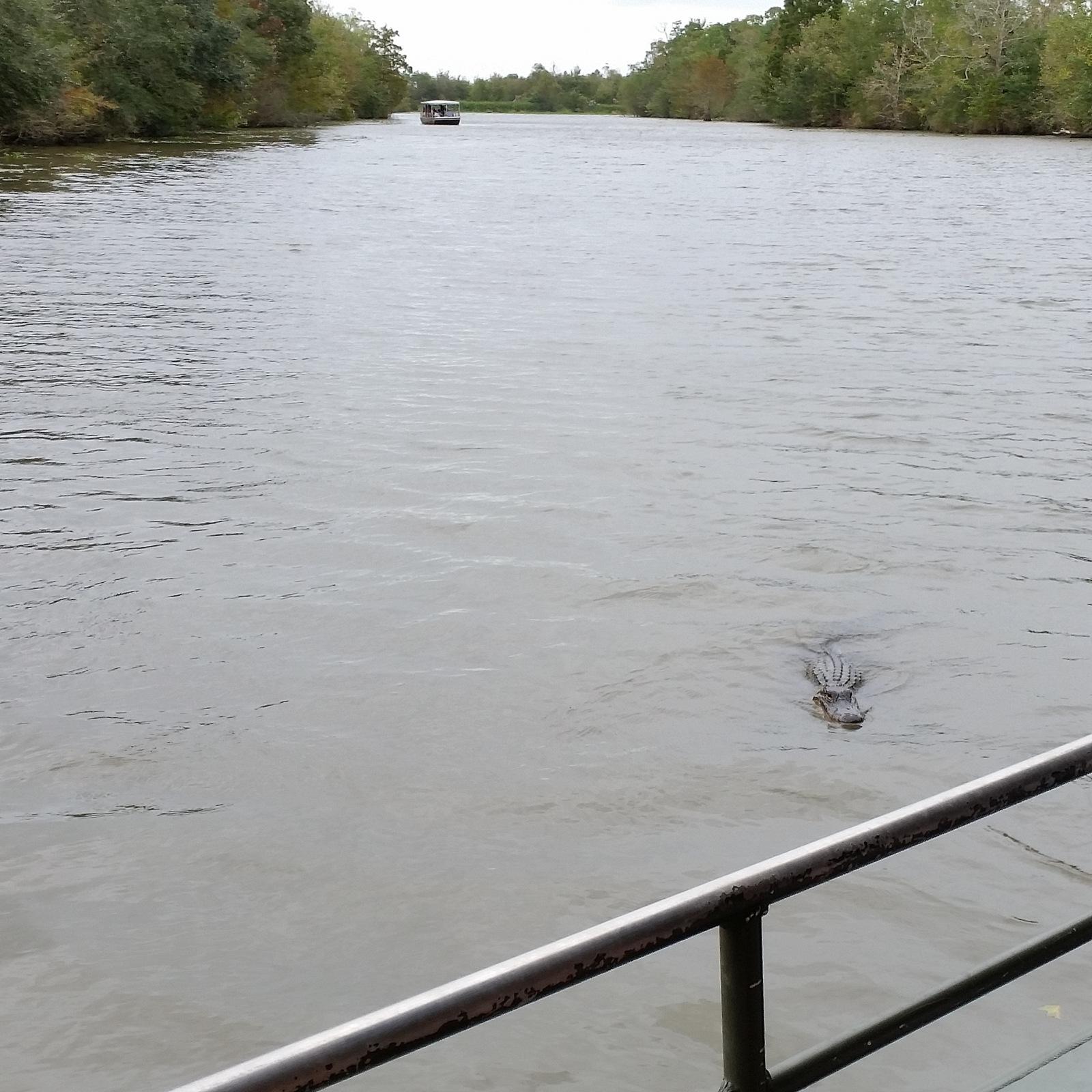 Cajun Swamp Tours Lafayette