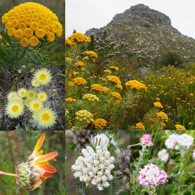 December daisies at Silvermine