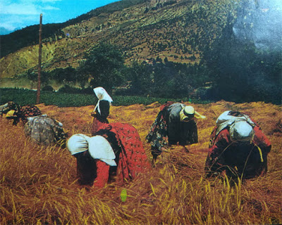Foto Pertanian di Plato Anatolia