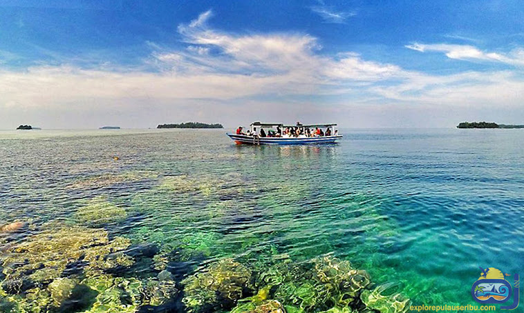 pulau dolphin pulau tanpa penghuni yang masih perawan
