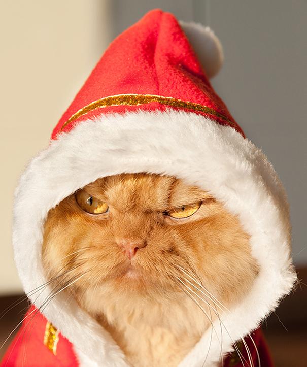 Garfi, The World's Angriest Cat-1