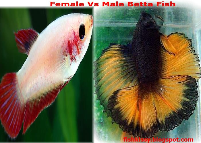 Male Fish And Female Fish