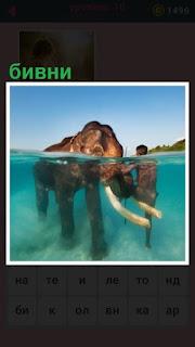 651 слов человек со слоном в воде рядом с бивнями 10 уровень