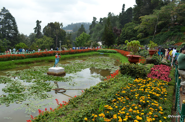 OOTY FLOWER SHOW 2017