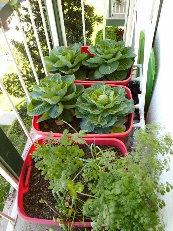 Balcony Garden Right March 13