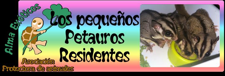 http://almaexoticos.blogspot.com.es/2015/07/gizmo-necesita-un-hermanito-y.html