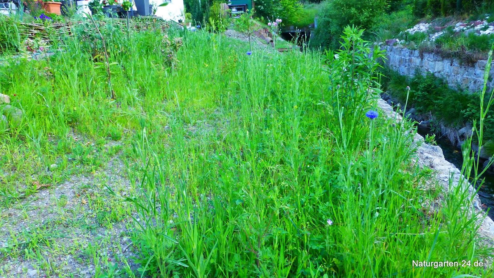wild kr uterpflanzen im garten und der natur wildblumenwiese. Black Bedroom Furniture Sets. Home Design Ideas