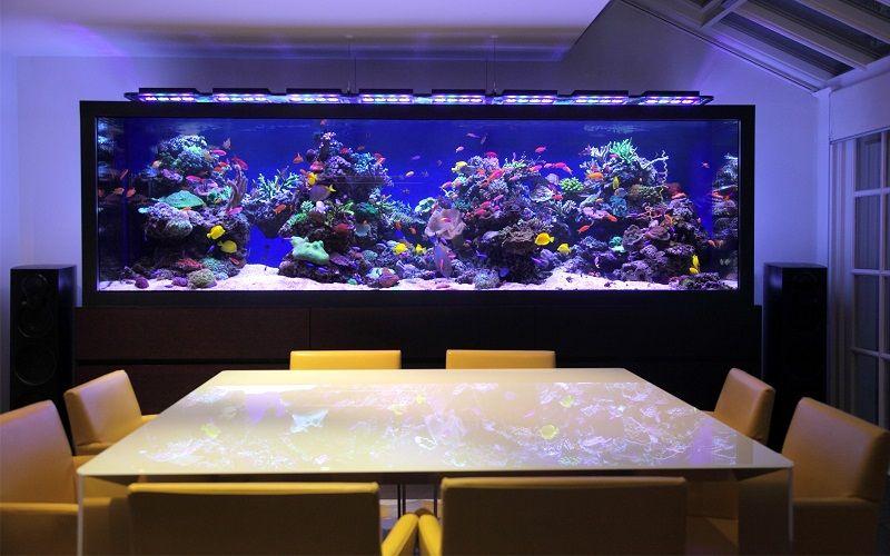 Gambar Aquarium Mewah