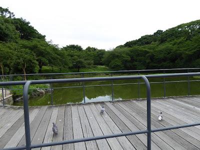 花博記念公園鶴見緑地 日本庭園 鳩