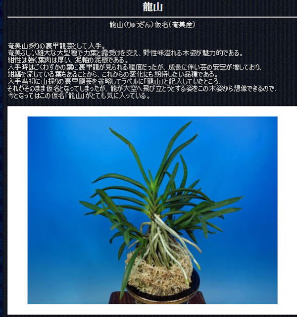 http://www.fuuran.jp/jiman_ryuuzan.html