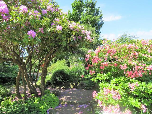 Unn deg å ta lunsjen i Trädgårdsföreningen i  Gøteborg - Rododendron IMG_4417 (2)-min