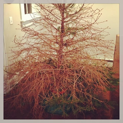 http://2.bp.blogspot.com/-cQn4WORlJbA/Up0gutNOcCI/AAAAAAAABk8/FpM7yau8ddk/s400/Christmas+Tree+2012.jpg